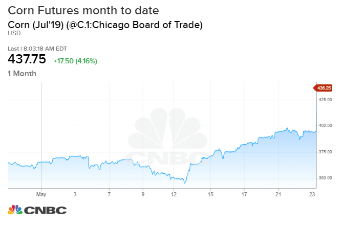 Corn futures gain 15% in May as soft commodities rally on